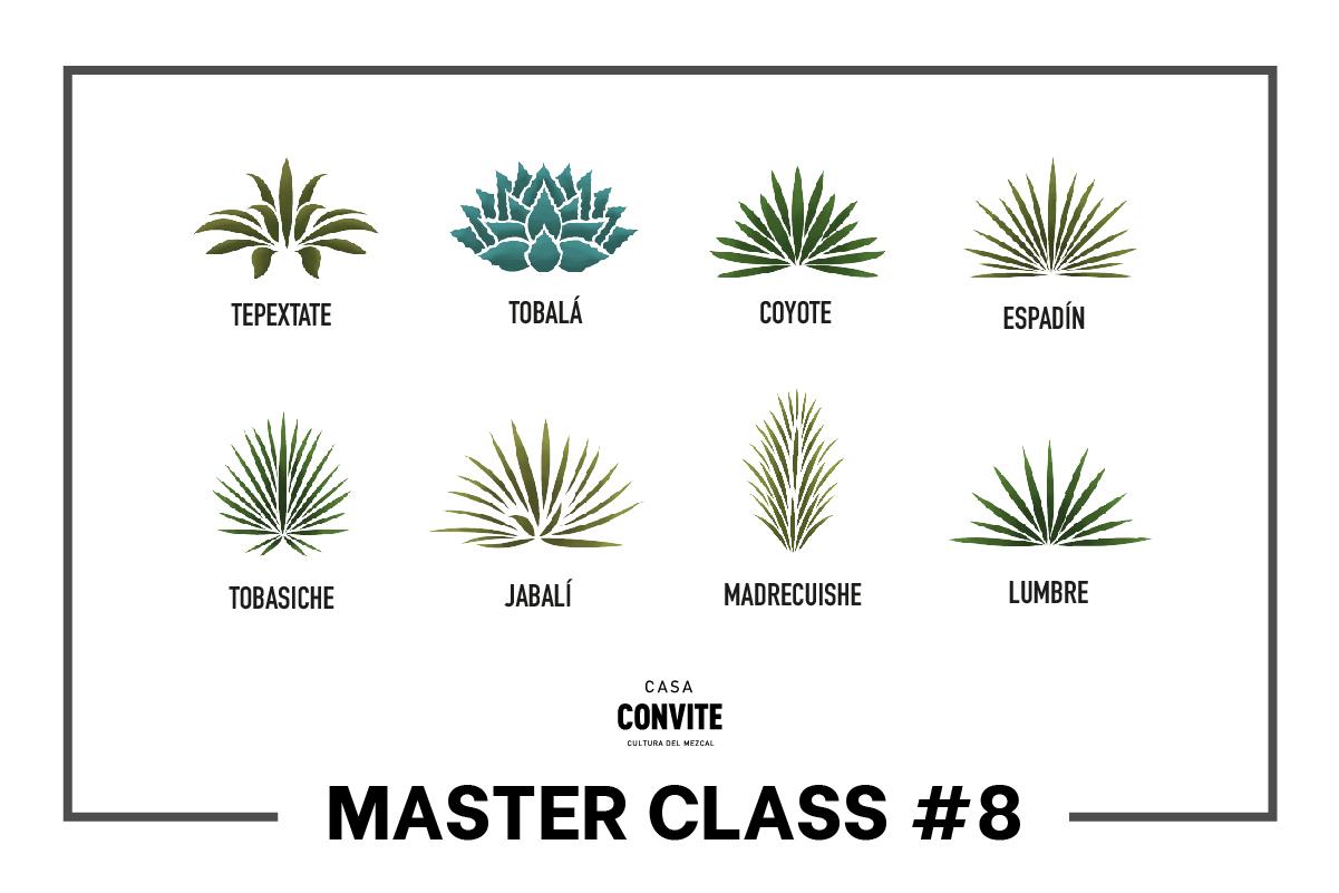 Master Class #8